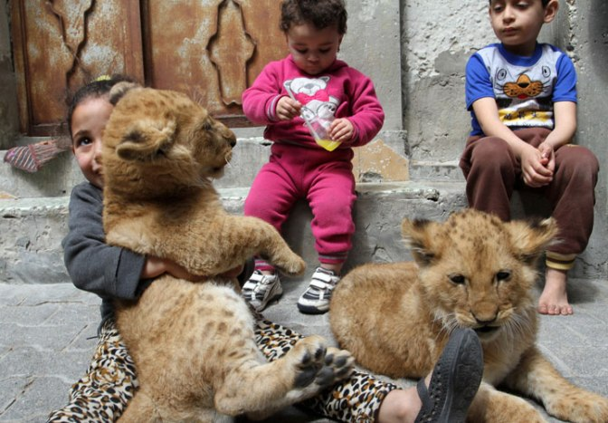 Gaza Strip family buys 2 lion cubs from zoo to keep as pets